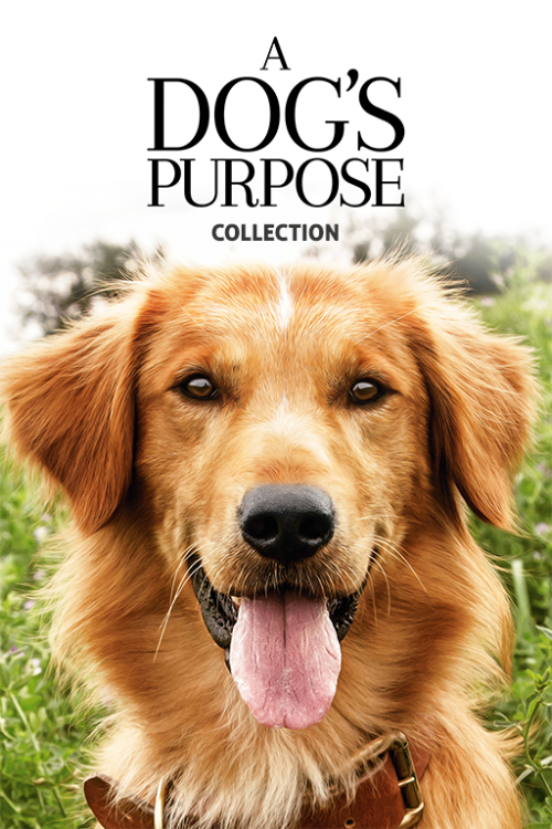 A-Dogs-Purpose-20174a5106b07468fe30.png