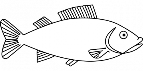 fish-outline-images950ae5b7a010a4a0.png