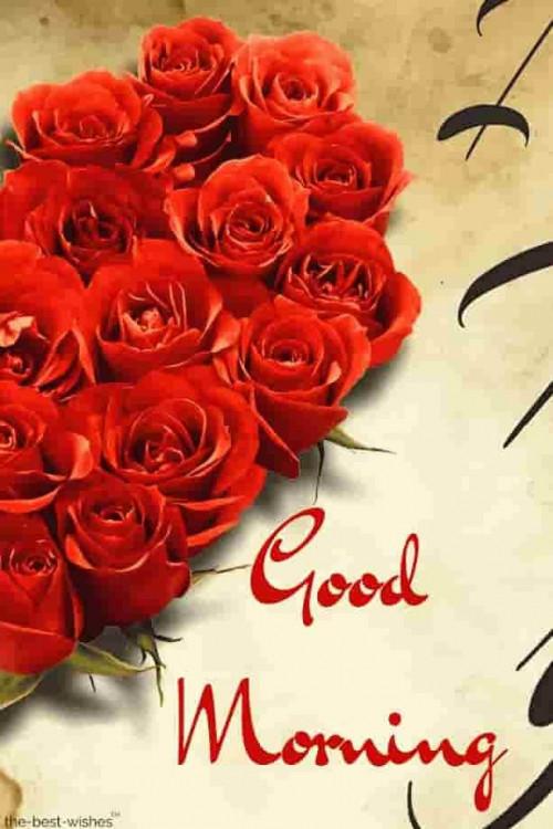 good-morning-rose-images58d30a629d195d56.jpg