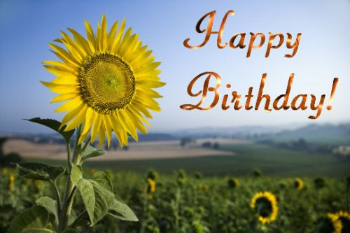 happy birthday sunflowers in hd free download