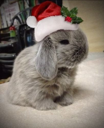 the-christmas-bunny37eb107c35bb2c3e.jpg